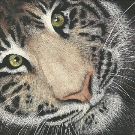 Creating art with scratchboard